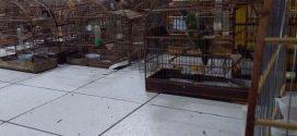Tráfico de animais silvestres é coibido no Noroeste de Minas