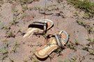 Ações para minimizar impacto da lama em Mariana ainda são necessárias