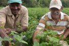Distribuião de sementes garantem alimento e renda para agricultores familiares