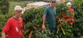 Cafeicultor familiar atendido pela Emater-MG ganha viagem para a Colômbia