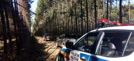 Maravilhas: veículos roubados são encontrados entre eucaliptos
