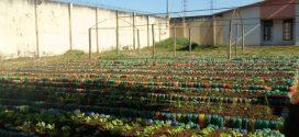 Jovens do Centro Socioeducativo de Uberlândia participam de oficina de horticultura e jardinagem