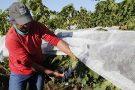 Vinhos produzidos com tecnologia da Epamig conquistam prêmios no Brasil