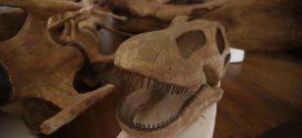 Museu Nacional reabre no Rio a sala dos dinossauros