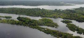 Saiba quais são as propostas de Bolsonaro e Haddad para o meio ambiente
