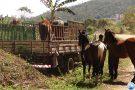 Vigilância Sanitária e Polícia de Meio Ambiente capturam cavalos às margens de ribeirão Paciência