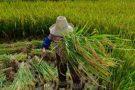 Governo procura vítimas de trabalho escravo da fazenda Brasil Verde
