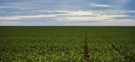 Consumidores avaliam que produção de alimento não ameaçam o meio ambiente