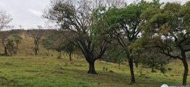 Desmatamento está caindo, mas desafios persistem
