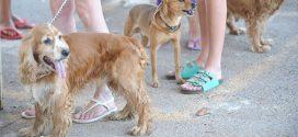 """""""Humanização"""" de animais de estimação movimenta mais de R$ 32 bilhões no mercado Pet"""