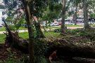 Municípios brasileiros integram programa de preservação de florestas