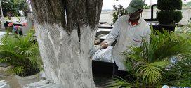 Cemitério Santo Antônio deve receber 10 mil visitantes no Dia de Finados. Veja horários de missas