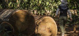 Ministério do Meio Ambiente repudia ataques a fiscais do Ibama e ICMBio