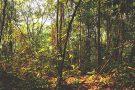 Florestas que crescem em áreas desmatadas são fundamentais para a biodiversidade e o carbono