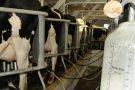 Pecuária de leite fica estagnada em 2018 após crescimento em 2017